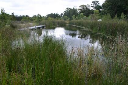 Narawang Wetland Sydney Olympic Park - Photo by Sydney Olympic Park Authority